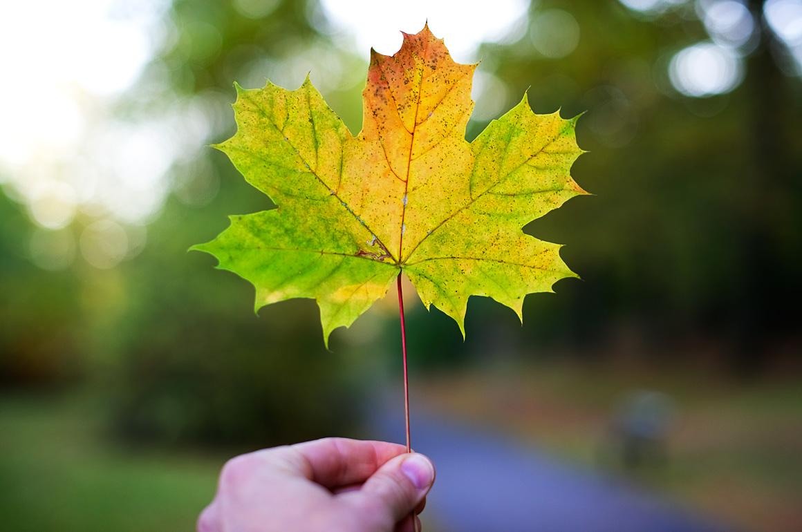 leaf1160x770